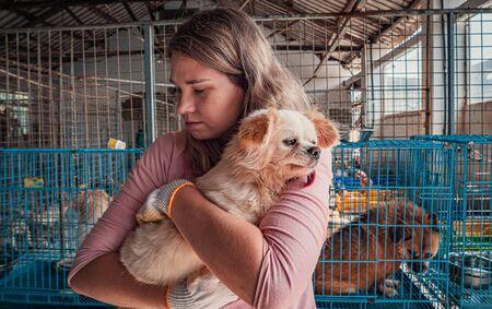 Female volunteer holds on hands little dog in shelter
