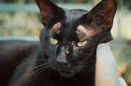 Portrait shot of homeless stray cat living in the animal shelter. Shelter for animals concept