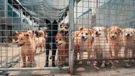 Unwanted and homeless dogs in animal shelter. Asylum for dog. Stray dogs behind the fence. Poor and hungry street dogs and urban free-ranging dogs. 스톡 콘텐츠