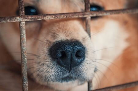 Portrait of sad dog in shelter behind fence waiting to be rescued and adopted to new home. Banque d'images - 136725364