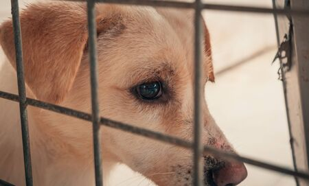 Portrait of sad dog in shelter behind fence waiting to be rescued and adopted to new home. Banque d'images - 136730165