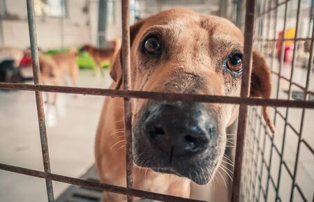 Portrait of sad dog in shelter behind fence waiting to be rescued and adopted to new home. Banque d'images - 140621788