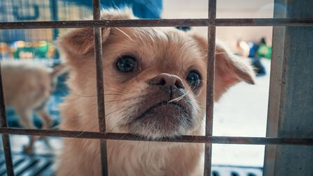 Portrait of sad dog in shelter behind fence waiting to be rescued and adopted to new home. Shelter for animals concept Banque d'images - 142177173