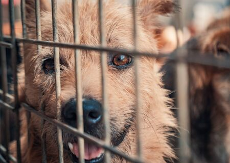 Portrait of sad dog in shelter behind fence waiting to be rescued and adopted to new home. Shelter for animals concept Banque d'images - 142177174