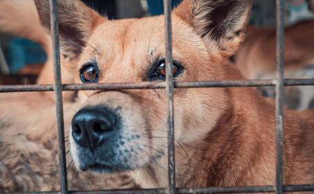 Portrait of sad dog in shelter behind fence waiting to be rescued and adopted to new home. Banque d'images - 140622220