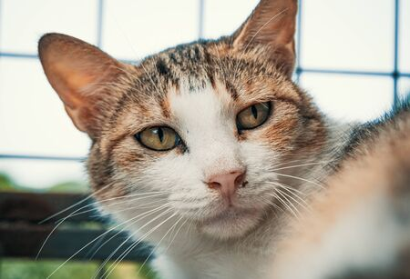 Cat pound. Close-up shot of homeless stray cat living in the animal shelter. Shelter for animals concept