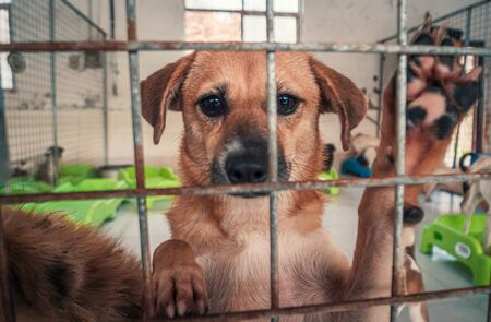 Portrait of sad dog in shelter behind fence waiting to be rescued and adopted to new home. Shelter for animals concept
