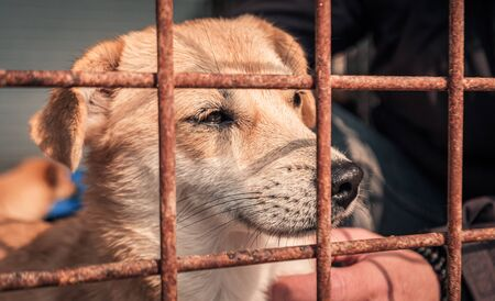 Portrait of sad dog in shelter behind fence waiting to be rescued and adopted to new home. Banque d'images - 141150118