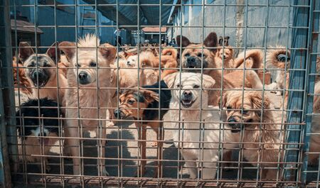 Unwanted and homeless dogs in animal shelter. Banque d'images - 142935252