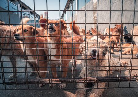 Unwanted and homeless dogs in animal shelter. Banque d'images - 142935253