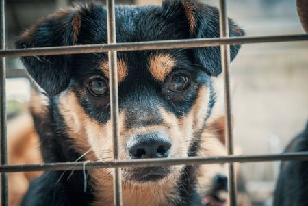 Portrait of sad dog in shelter behind fence waiting to be rescued and adopted to new home. Banque d'images - 141150063