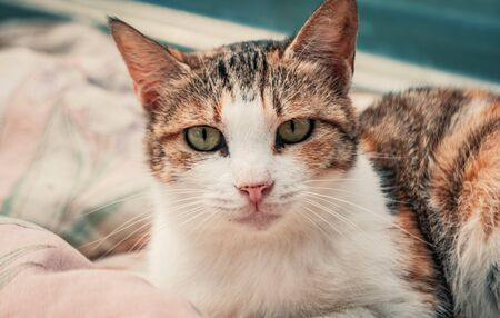 Portrait shot of homeless stray cat living in the animal shelter. Shelter for animals concept Banque d'images - 141696115