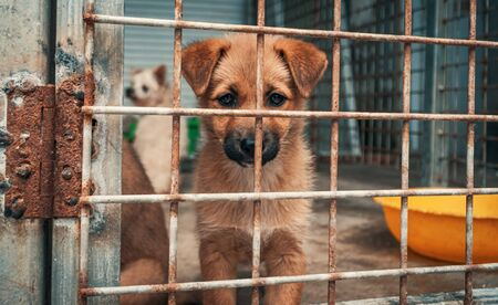 Portrait of sad puppy in shelter behind fence waiting to be rescued and adopted to new home. Shelter for animals concept 스톡 콘텐츠