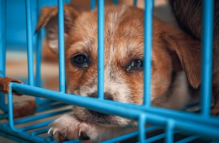 Portrait of sad puppy in shelter behind fence waiting to be rescued and adopted to new home. Shelter for animals concept Banque d'images - 141696142