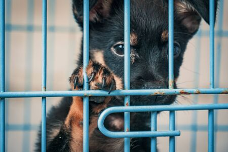 Portrait of sad puppy in shelter behind fence waiting to be rescued and adopted to new home. Shelter for animals concept 版權商用圖片
