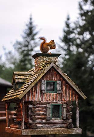 The squirrel on the little wood house