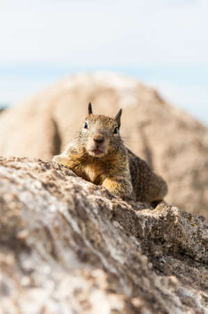The squirrel on the rock