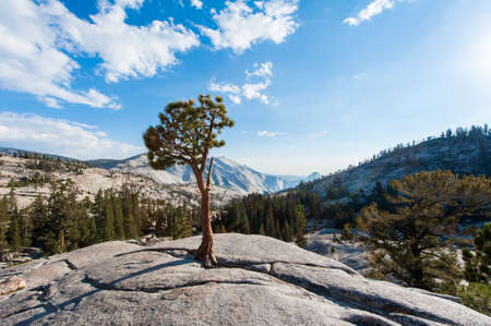 The trees on the rock in Yosemite Park