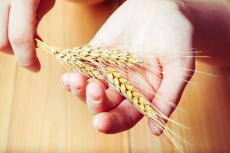 Hands holding wheat ears against wooden background