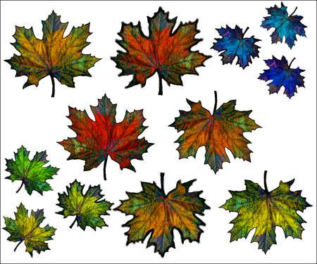 Illustration - Vector Maple leaves Stock Vector - 24727620