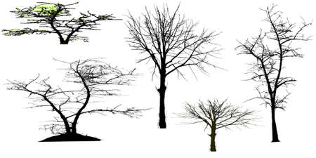 silhouettes of trees Stock Vector - 24874568