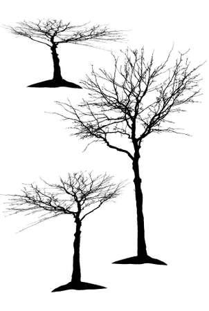 силуэты деревьев Иллюстрация