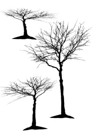 silhouettes of trees Stock Vector - 24874569