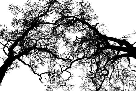 silhouetten van de bomen