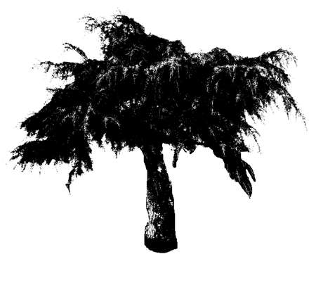 weeping willow tree: Illustration silhouettes of trees