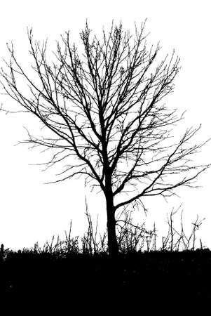 Illustration silhouettes of tree