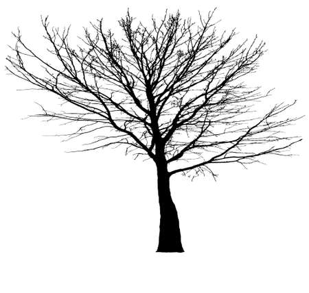 Illustration silhouettes of tree Stock Vector - 25118595