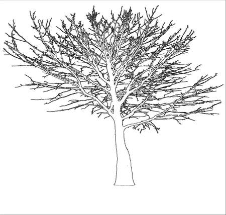 weeping willow tree: Vector silhouette of the tree in the cold