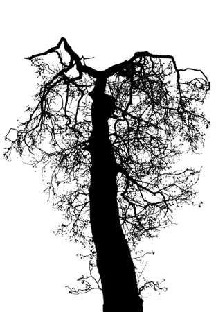 weeping willow tree: Illustration silhouettes of tree