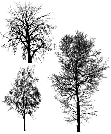 pine boughs: Illustration silhouettes of tree