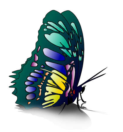 butterfly isolated: Butterfly isolated on white Illustration