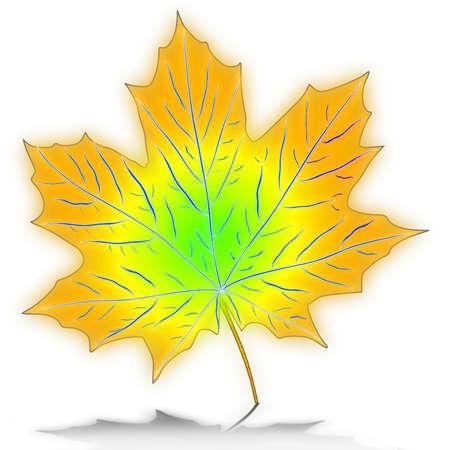 Вектор - вектор кленовые листья Иллюстрация