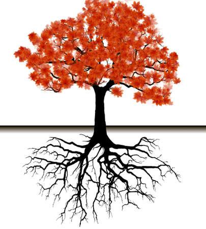 arbol con raices: Vector - fondo de la silueta del árbol Vectores
