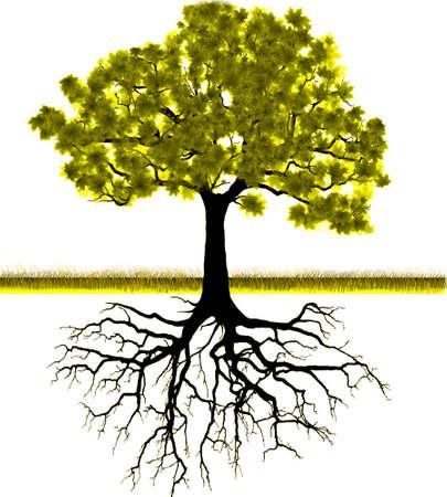 Вектор - Силуэт дерева фон