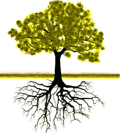 grass roots: Vector - Tree silhouette background