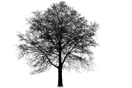 Illustration silhouettes of trees