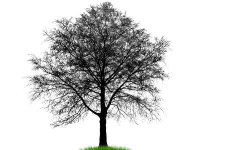 Illustration silhouettes of trees Vector