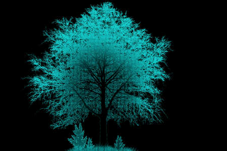 pine boughs: Silhouette of a tree in a fog on a black background
