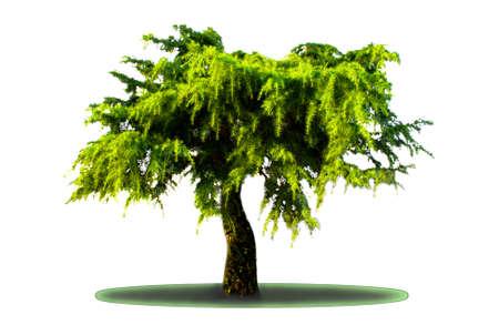 Иллюстрация силуэты деревьев Иллюстрация