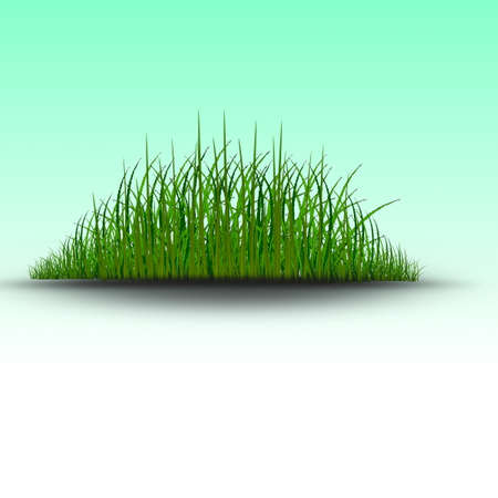 water weed: Green grass vector Illustration