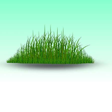 grass: Green grass vector Illustration