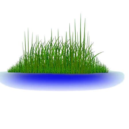 Groen gras in het water vector Stock Illustratie