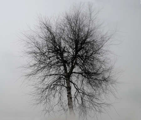 pine boughs: Illustration silhouette of a tree in the mist Illustration