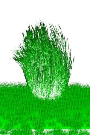 pine boughs: Illustration of green reeds