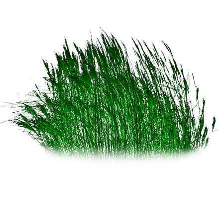 Illustration of green reeds