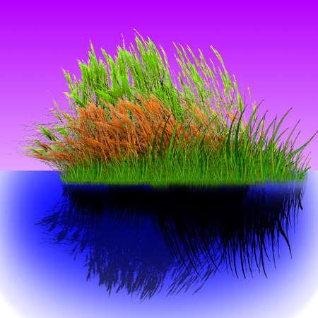 Vector - reeds in the water Vector